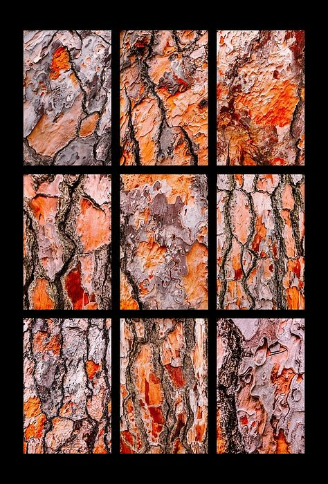 Pine Tree Bark Textures Portrait Montage. Australian Tree Bark Series by Lexa Harpell. A collection of Aussie tree bark images. Taken from my travels around Australia. Add a splash of COLOUR and UNIQUE LOOK! Visit my photo gallery and get a beautiful Fine Art Print, Canvas Print, Metal or Acrylic Print OR Home Decor products. 30 days money back guarantee on every purchase so don't hesitate to add some AUSTRALIAN INTIMACY in your home.