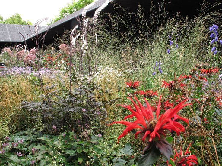 17 best images about garden design plants on pinterest for Piet oudolf serpentine gallery