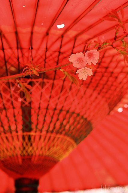 Japanese umbrella with sakura