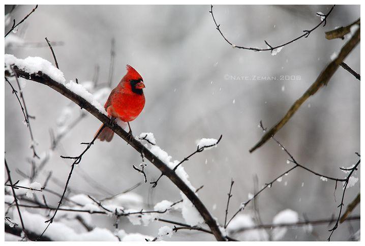 Crimson Watch by Nate Zeman