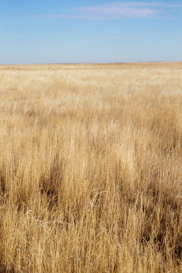 The Great Plains #AmericaBound @Sheila Collette Farm