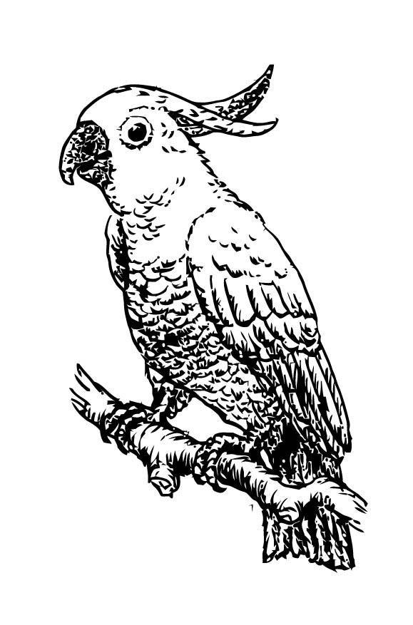Charmant Blaue Macaw Malvorlagen Galerie - Ideen färben - blsbooks.com