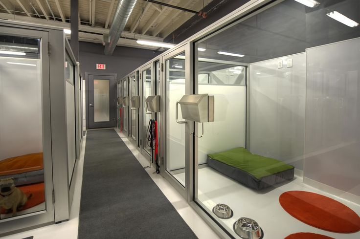 Dog boarding facility designs the urban hound boston for Boarding facility for dogs