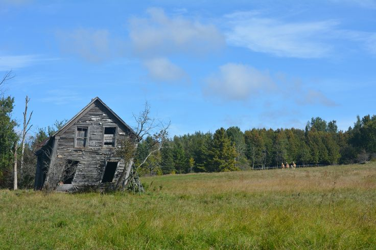 Old barn and curious horses.