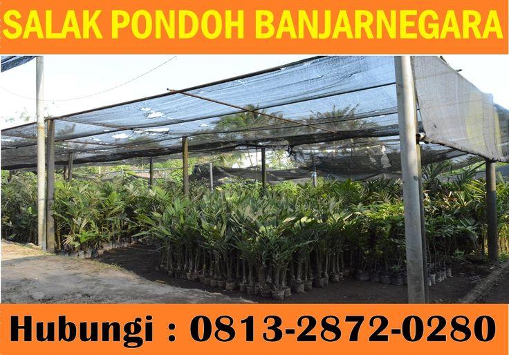 Kami menjual Bibit Salak Pondoh Banjarnegara Madu. Pemesanan HUB : 0813.2872.0280 (Bpk.  Subambang) Aktif 24 jam nonstop.