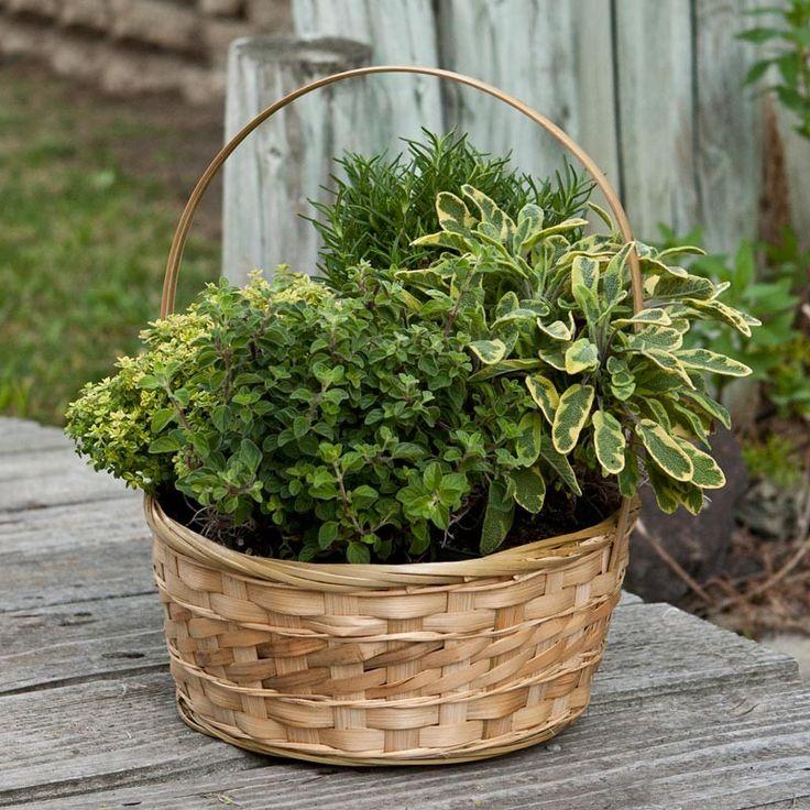 Patio Herb Garden Idea: Herb Container Gardens