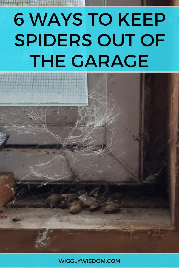 6 Surefire Ways To Keep Spiders Out Of The Garage Spider Problem Spider Get Rid Of Spiders