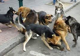 UN ALBERGUE ESPECIALIZADO EN PROTECCION ANIMAL