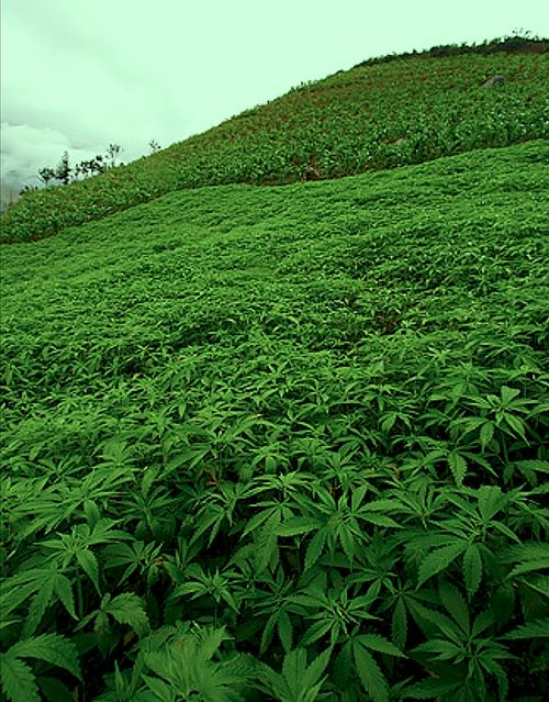 Hills of green ...: