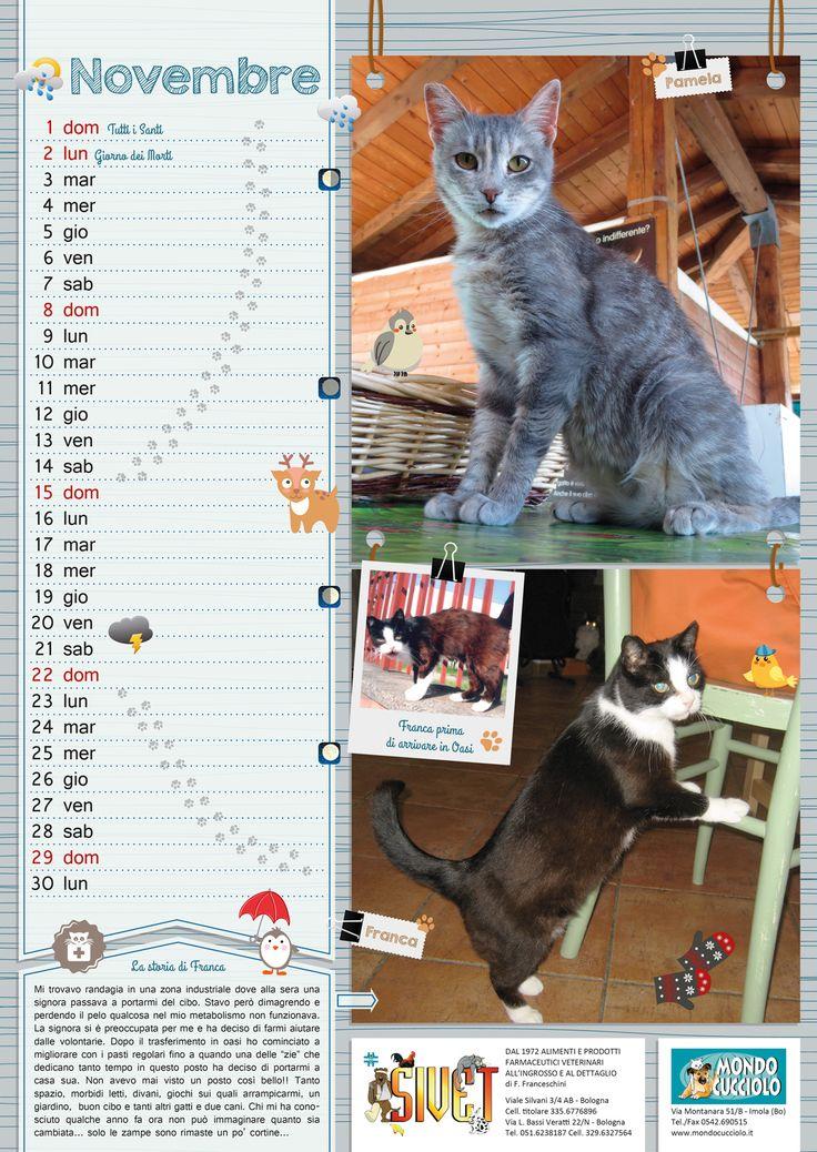 #calendar #november #cats #calendario #novembre #gatti