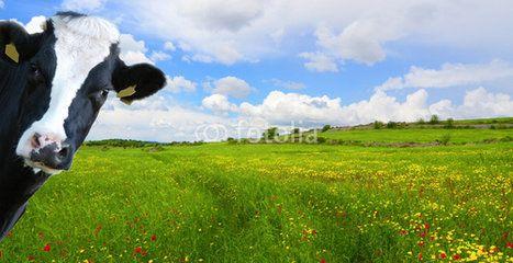 Illustrazione di una prateria con una mucca curiosa che sbircia #microstock #marketing #webdesign #design #WebContent #SEO #csstemplates #css #HTML5 #Websites #web20k #web2015 #web