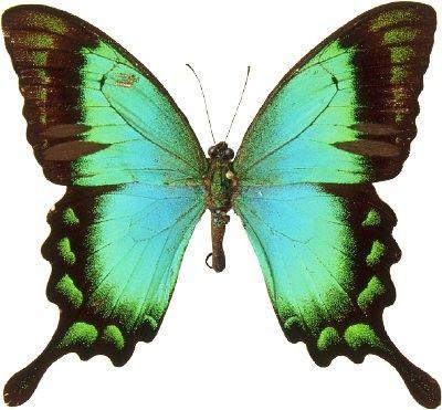 always butterflies