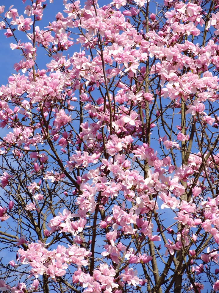 Spring has sprung in Stanley Park - Vancouver