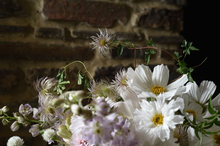 white cosmos, clematis seed heads, delphinium