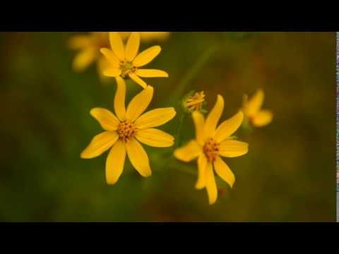 Flower - Free Stock Video - License: CC0 Public Domain (Free for commercial use No attribution required) Flower - Free Stock Footage