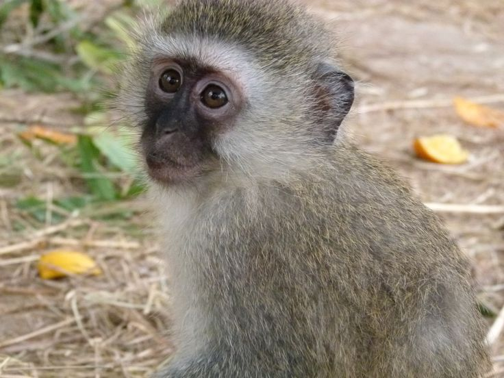 Riverside wildlife centre   #southafrica #primates #volunteer #animals #cute #travel