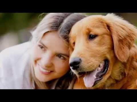 Hundeudstyr - Køb online