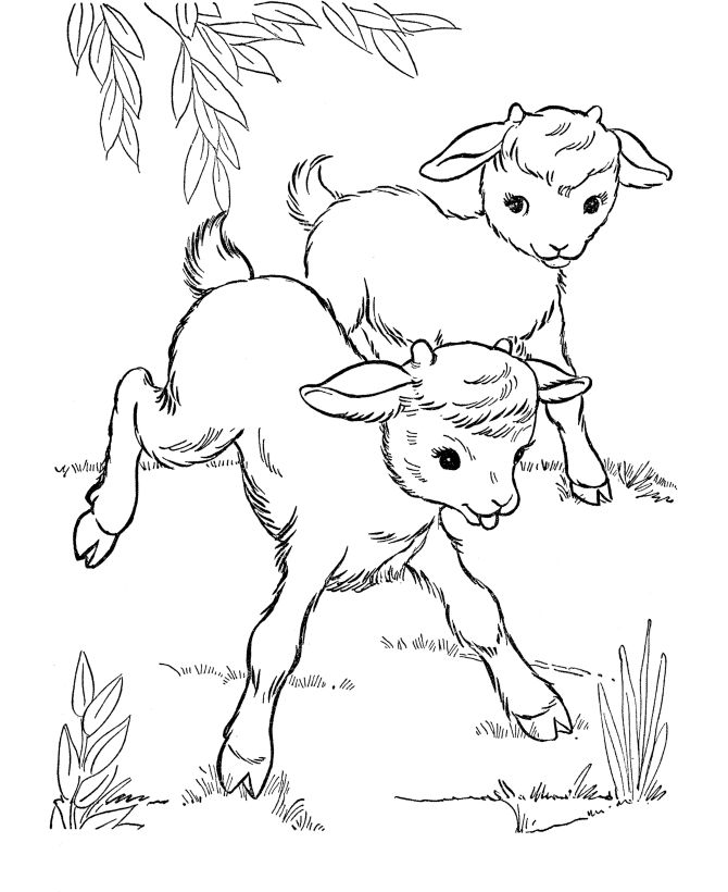 Farm animal coloring page Goat Baby goats KidsFarm