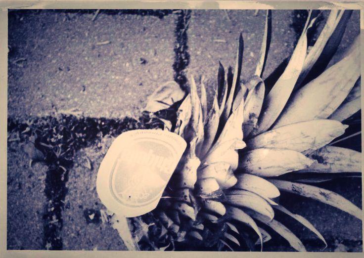 Biomüll - Ananas #monochrome #blackandwhite #fotografia #schwarzweiss #analogfoto #iloveleipzig #thisleipzig