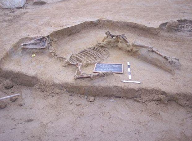 Καλά διατηρημένη ταφή αλόγου στο Φαληρικό Δέλτα