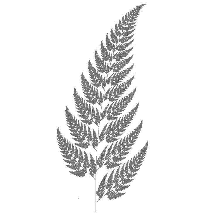 fern drawing - Google Search