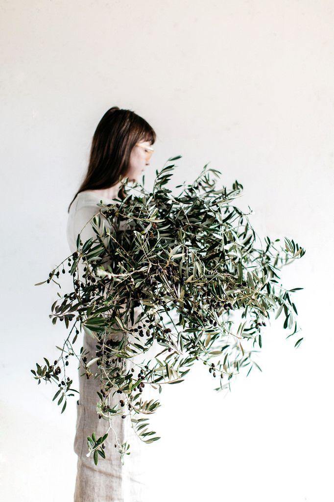 Olive tree foliage. Muse: Ella Bendrups. Photo by Luisa Brimble.