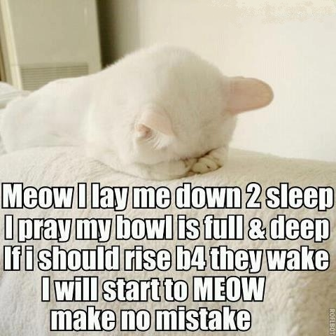 I always thought cats worshipped food.