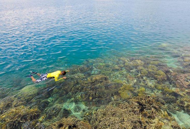 Pulau Petong Surga Snorkeling Tersembunyi di Kepulauan Riau - Kepulauan Riau