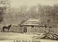 A bush home in Australia in 1895