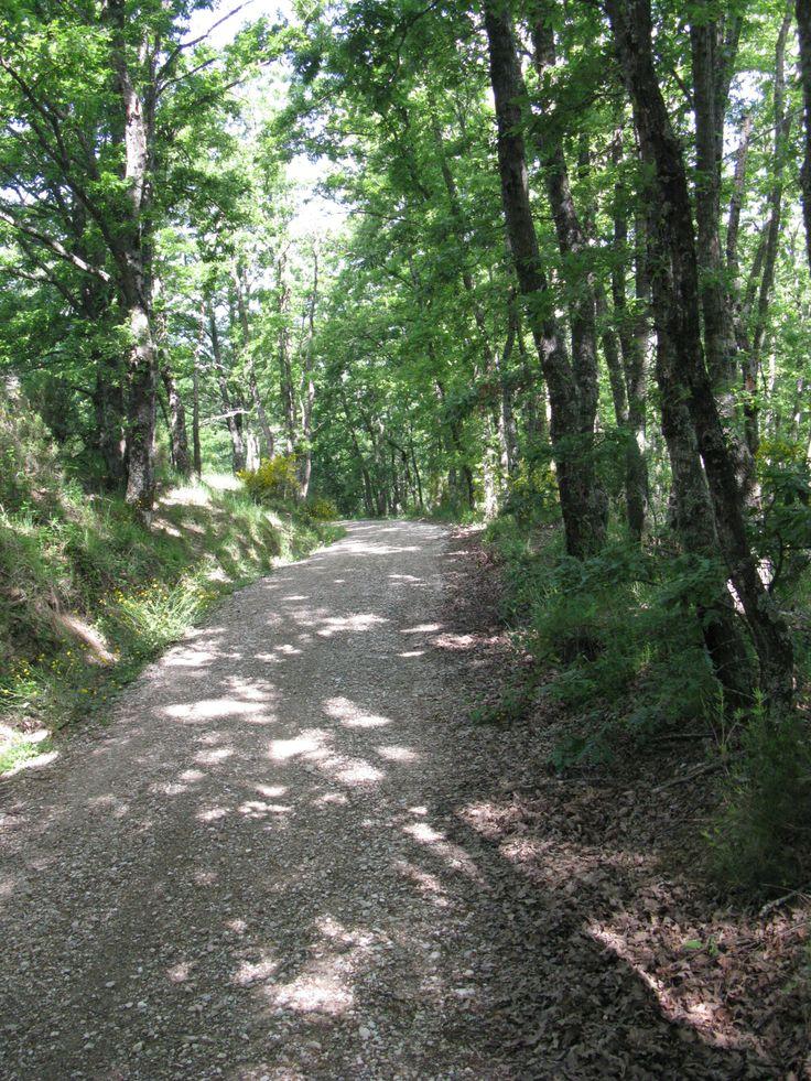 Tracciato 2-1 - ML 2.428 - pendenza 25%.  Percorso trekking che da Lisciano porta al Belvedere percorrendo un sentiero in mezzo al bosco.