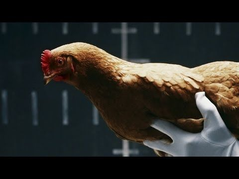 Chickens Show Off Ability to Keep Their Heads Steady in Mercedes-Benz Commercial
