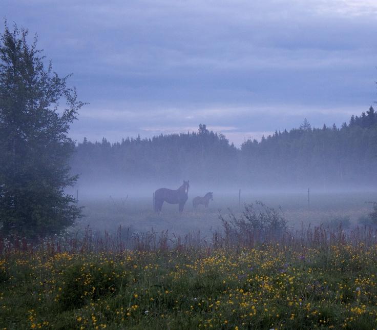 Gagnef är känt för sina hästnära boendemiljöer