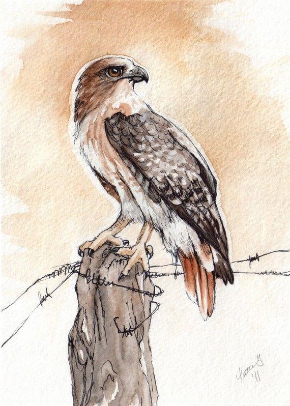 Hawk                                                                                                                                                                                 More