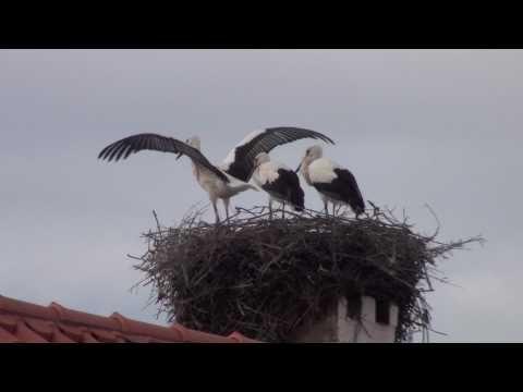 Boas pessoal, obg espero que tenham gostado do vídeo!!!! =D Escolham uma ave entre Cegonha-Negra e Andorinha-das-Barreiras, pro próximo vídeo!!!!! =D Twitter...