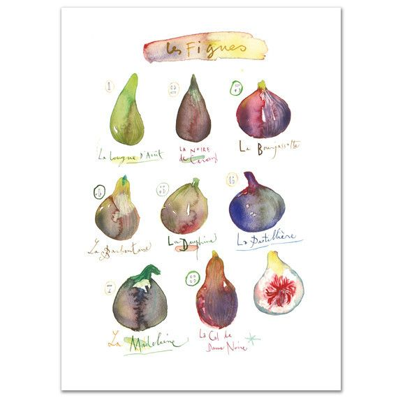Figs Archival giclee reproduction print from my watercolor illustration. Signed…