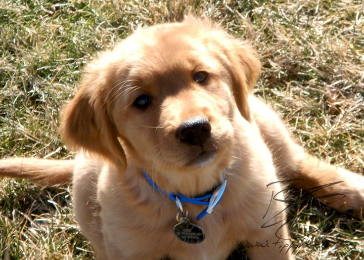 Puppy Tao: Puppy Foundations: Balancing Risks in Socialization
