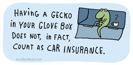 gecko: Quote