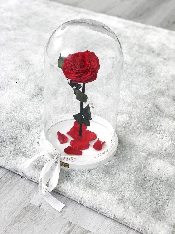 die elegante la belle mit wei em holzboden und roter rose. Black Bedroom Furniture Sets. Home Design Ideas