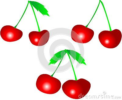 Shielded cherries colored with leaves.  Vector drawing.