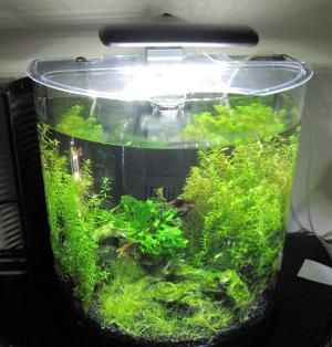 How To Use a Timer For Your Aquarium Lights: Aquarium Light Fixture