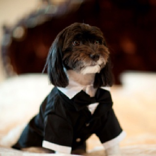 Weddings and dogs! A to Z Event Management, Toronto, Canada