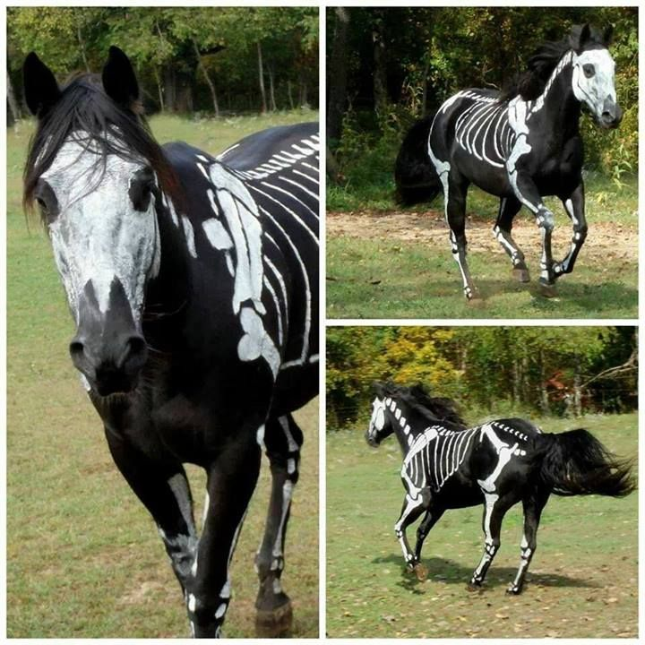 Painted Halloween skeleton horse - recreate this or any other fun look with Pony Paint! Find it here ---> www.chicksaddlery.com/page/CDS/PROD/PP7057