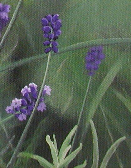 Wiebke Müller, Lavender (detail) - oil on canvas