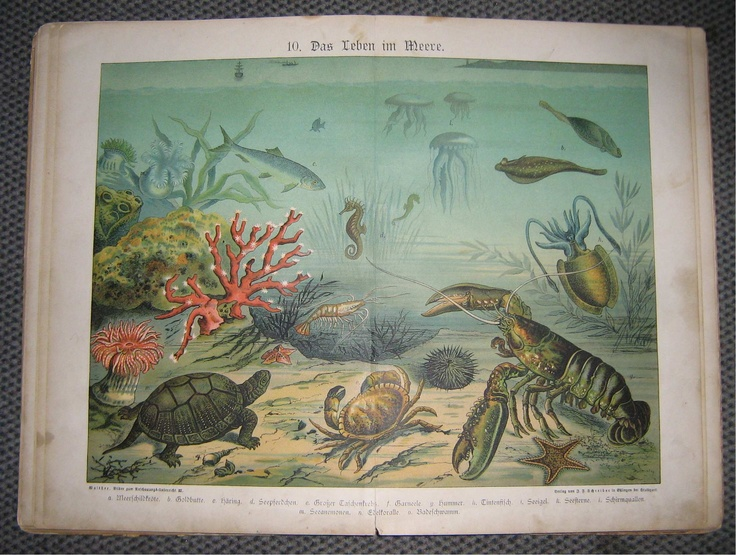 Unterwasserwelt  Walther, E.:  Bilder zum Anschauungsunterricht: Geographische Charakterbilder, Esslingen: 1891.  Underworld.  Es ist keine kommerzielle Nutzung des Bildes erlaubt. But feel free to repin it!