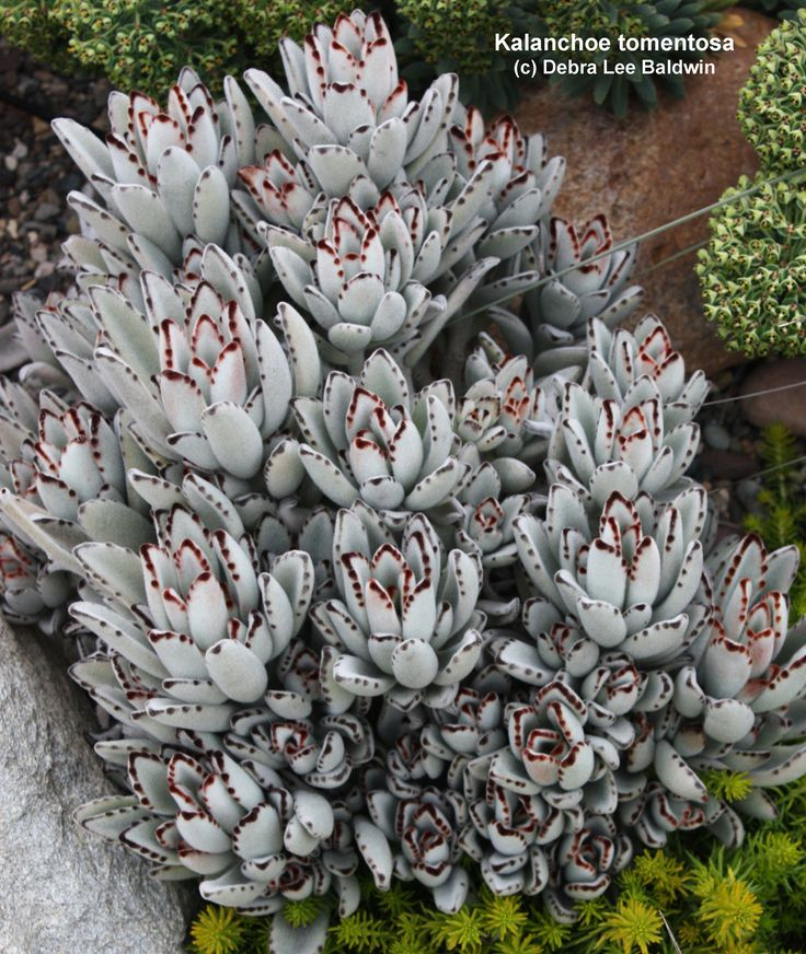 2388 Best Images About Succulents And Cacti On Pinterest