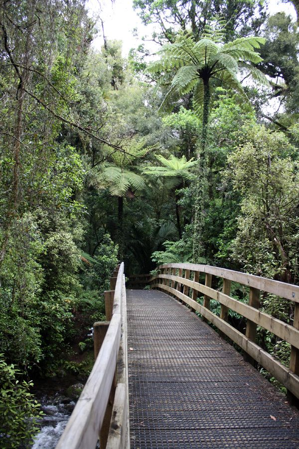 A bridge across the Kaniwhaniwha stream on the northern slopes of Mt Pirongia