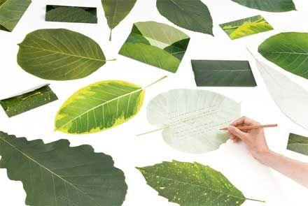 Leaf Letter, lovely actually!