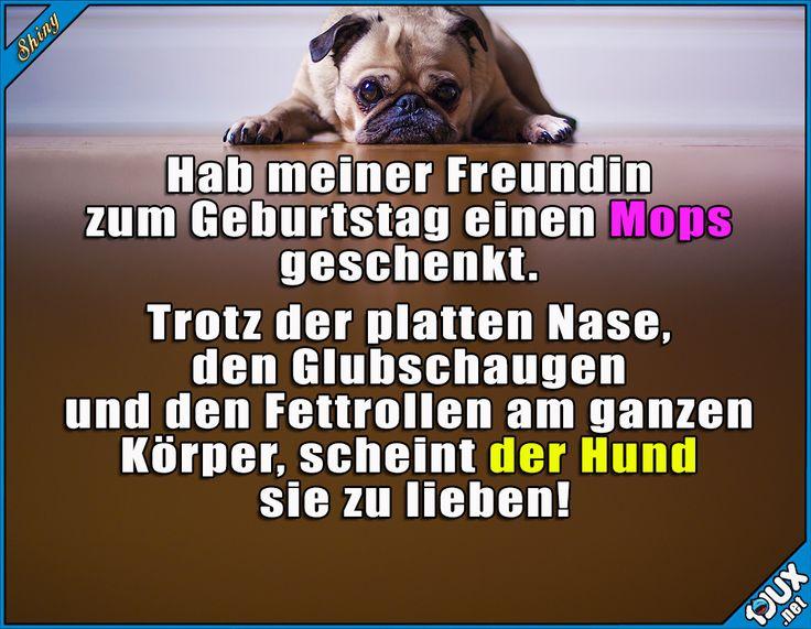 Liebe auf den ersten Blick! :P  #Mops #Freundin #lustig #Humor #ärgern #Sprüche #Hund #Hunde #fies