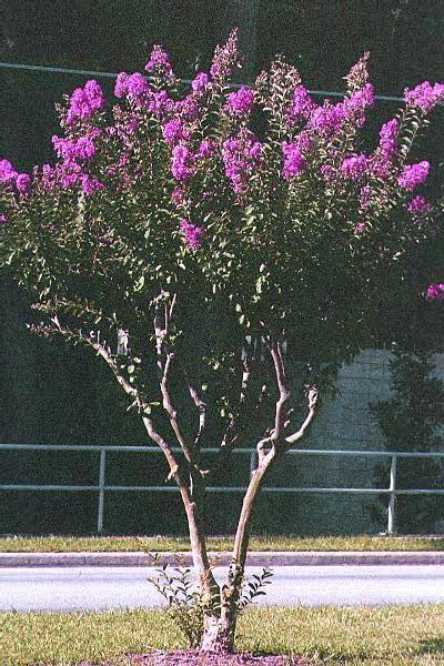 pruning2.jpg 400×600 pixels