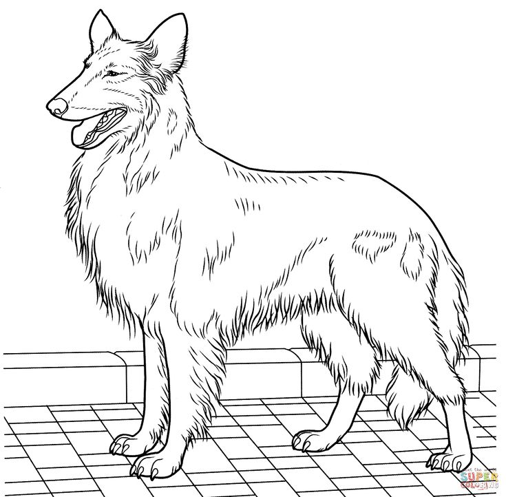 rough collie coloring pages - photo#9